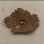 七搦 綾乃 「海を照らす」 桂 (対馬歴史民俗資料館にて展示)